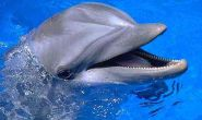 For talk on captive dolphins, panel gets wild