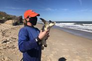 Mote caregivers rehab and release nine endangered Kemp's ridley turtles