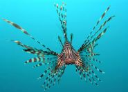 South Florida eco-preneurs ready to spring trap on lionfish