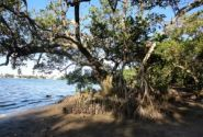 Mangrove violations apparent In DEP inspection