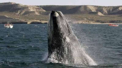 rightwhale.jpg